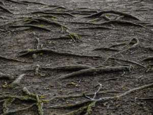 Roots that may cause RootX